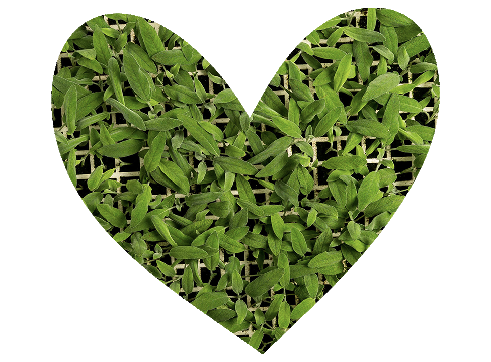 heart-rd